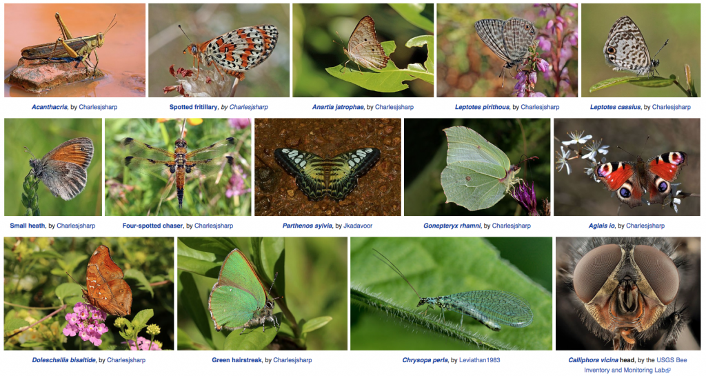 A capture of multiple featured images from Wikipedia's insect page.
